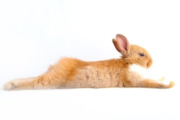 Books about rabbits