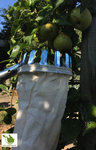 Fruit picker / apple picker with sturdy extendable handle up to 3 meters