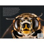 'Bijen' - Sam Droege & Laurence Packer
