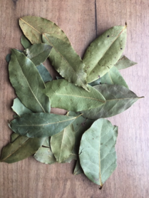 Bay leaf whole hand picked