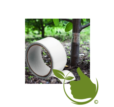 Adhesive tape to protect fruit trees against pests